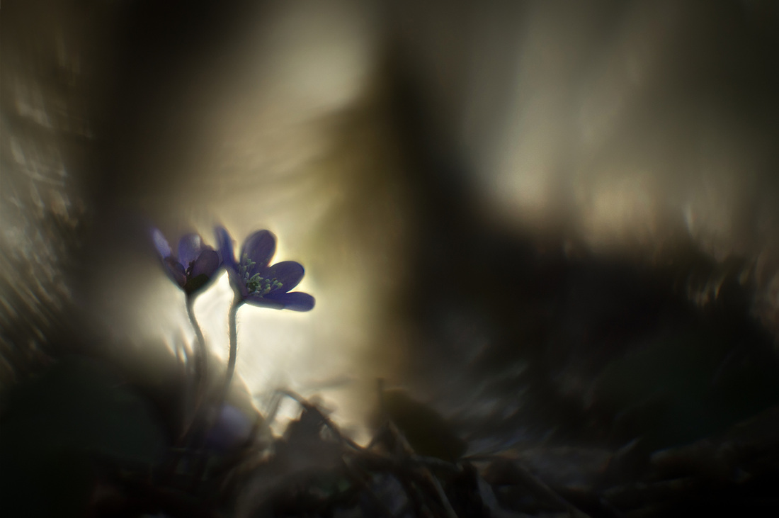 lumen naturae fiori flowers luce tenebre ombra oscuro oscurità
