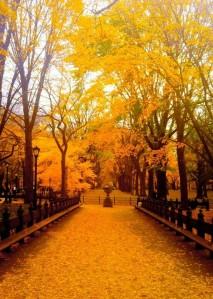 L'autunno è una seconda primavera, quando ogni foglia è un fiore (Sull'Autunno)